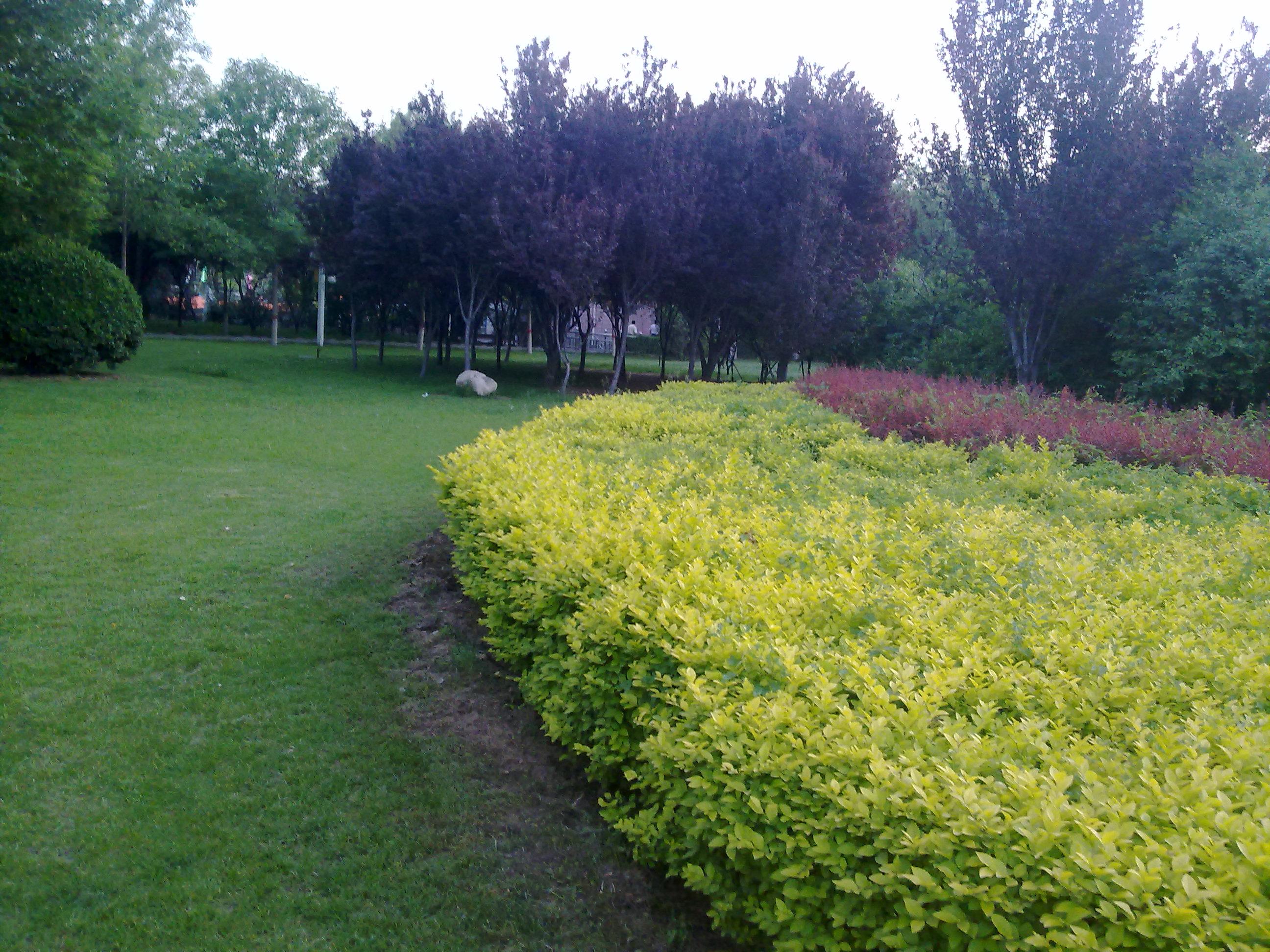 河北绿化公司——广场绿化