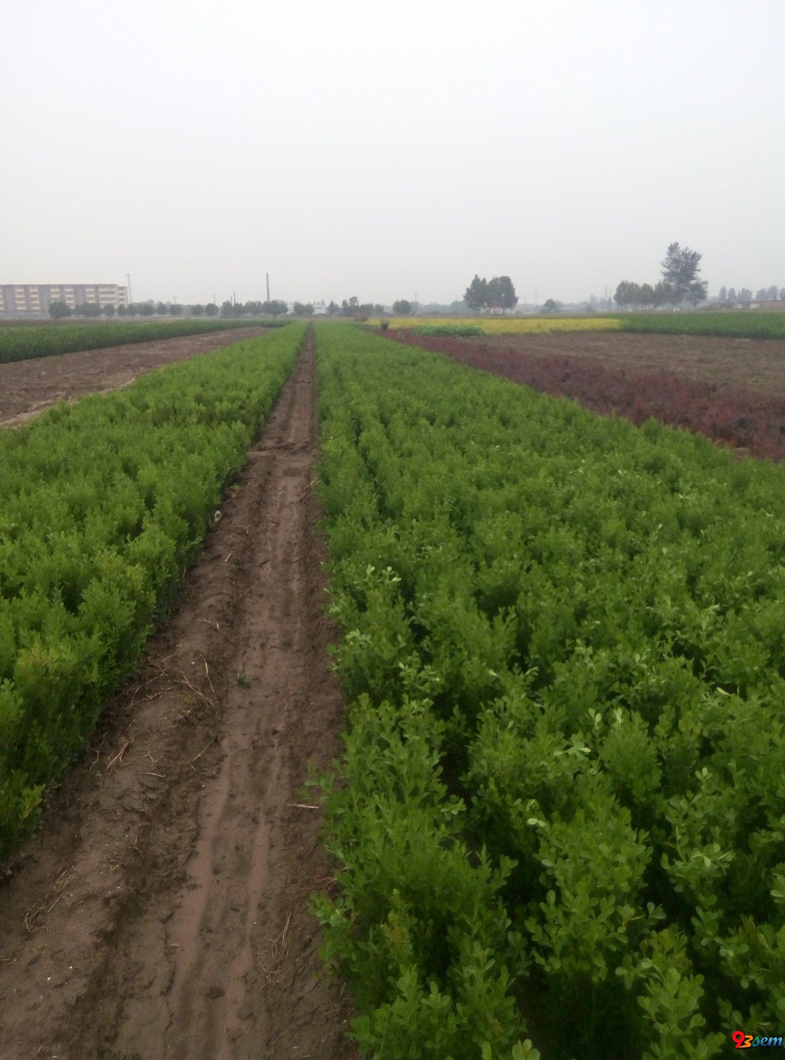 河北苗木公司——小区绿化